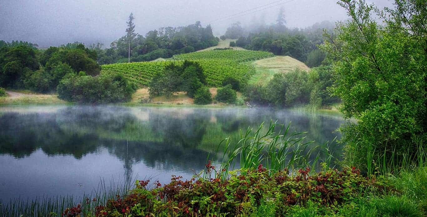 Mendocino vineyard by water